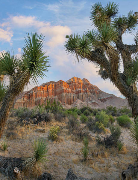 Wall Art - Photograph - Joshua Tree And Cliffs, Red Rock Canyon by Tim Fitzharris
