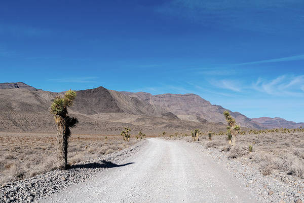 Photograph - Joshua Tree By The Road by William Dickman