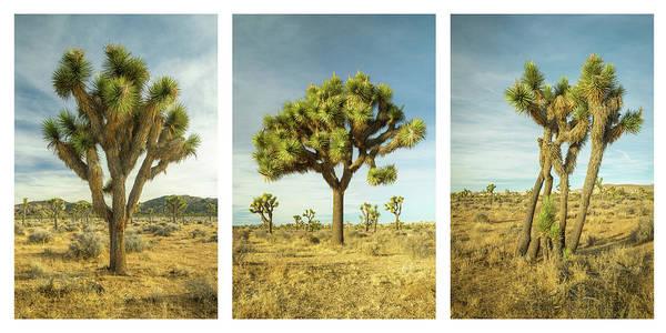 Photograph - Joshua Tree Collage by Alexander Kunz