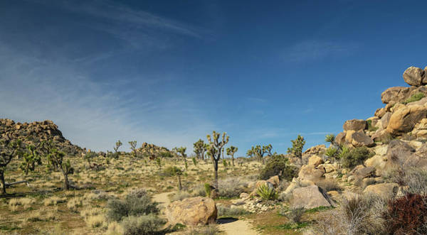 Wall Art - Photograph - Joshua Tree National Park by Michael Lustbader