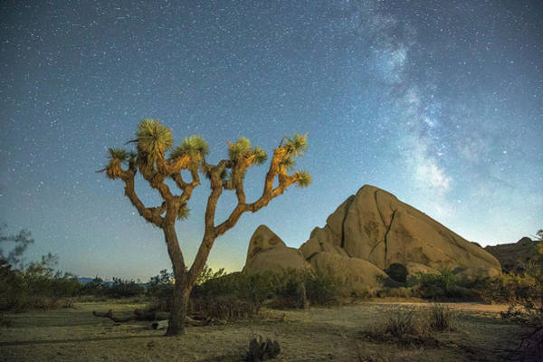 Wall Art - Photograph - Joshua Tree Np by Davorin Mance
