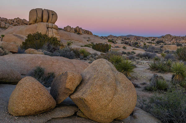 Photograph - Joshua Tree On The Rocks by Matthew Irvin