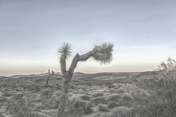 Digital Art - Joshua Tree Sketch by Alison Frank