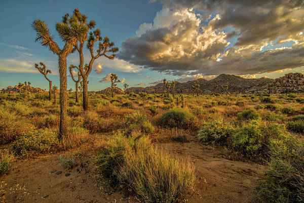Wall Art - Photograph - Joshua Tree - Where I Wanna Be by Peter Tellone