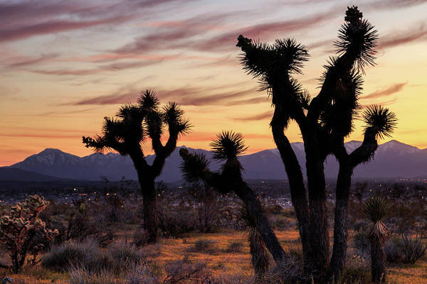 Photograph - Joshua Trees At Sunset by James Eddy