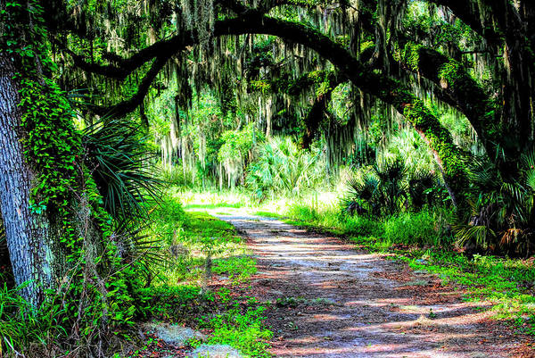 Photograph - Journey Through The Live Oaks by Robert Stanhope