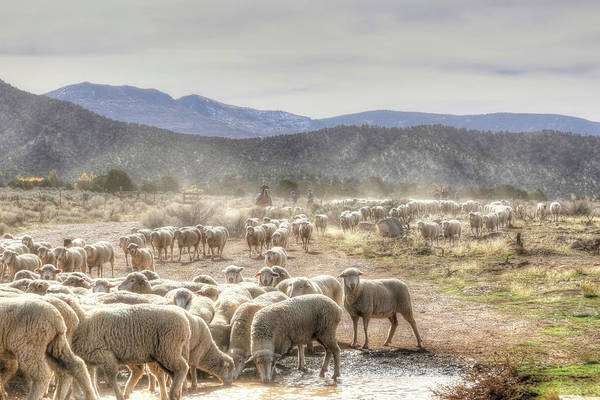 Wall Art - Photograph - Journey To Winter Pastures by Donna Kennedy