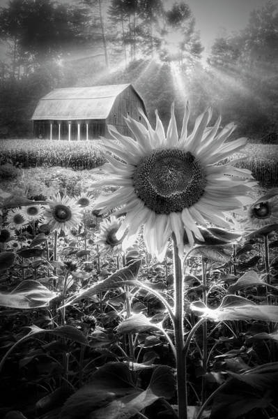 Photograph - Joy In Black And White by Debra and Dave Vanderlaan
