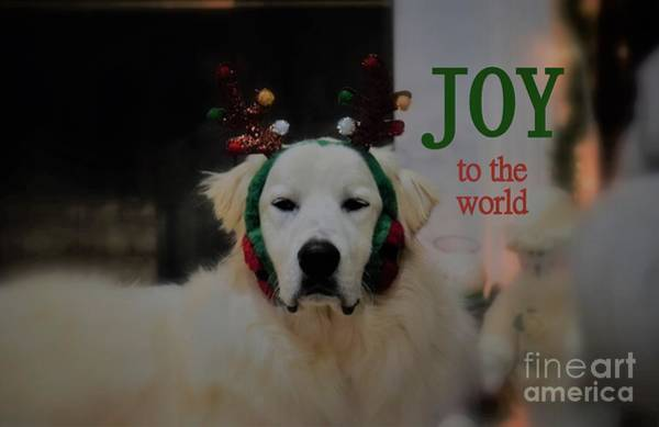 Photograph - Joy To The World Pyrenees by Patti Whitten