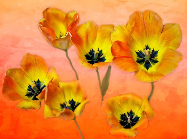 Wall Art - Photograph - Joyful Springtime by Lorraine Baum