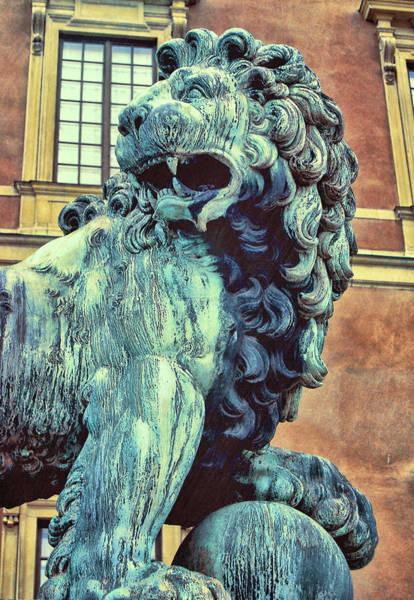Photograph - Judah's Lion by JAMART Photography