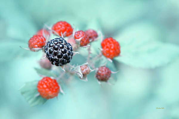 Photograph - Juicy Berries by Christina Rollo