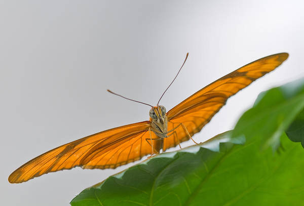 Wall Art - Photograph - Julia Butterfly by Michael Lustbader
