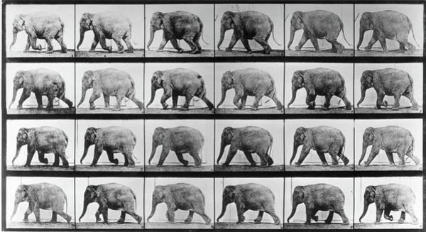 Photograph - Jumbo Jogger by Eadweard Muybridge