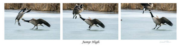Photograph - Jump High by Edward Peterson