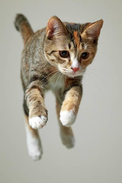 Tortoiseshell Photograph - Jump Kitten by Akimasa Harada