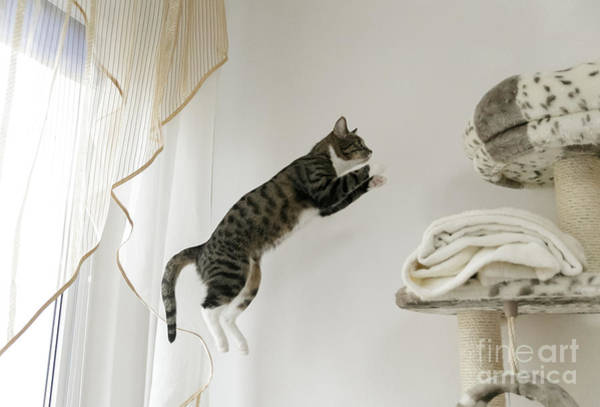 Wall Art - Photograph - Jumping Cat by Krzysztof Smejlis