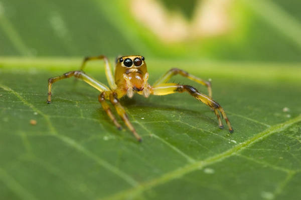 Wall Art - Photograph - Jumping Spider by Michael Lustbader