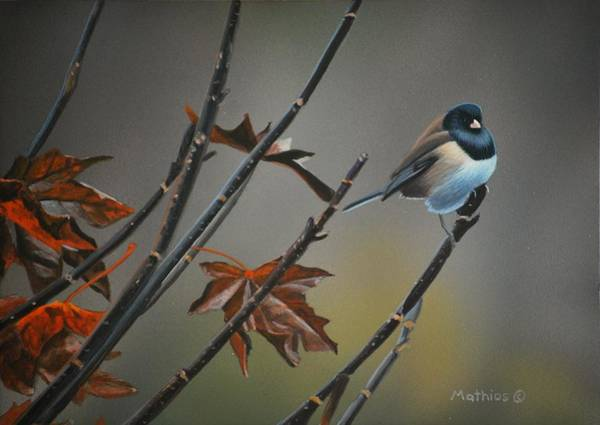 Painting - Junco by Peter Mathios