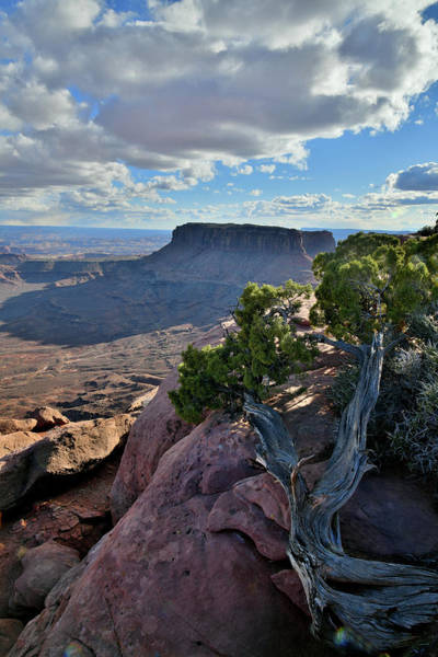 Photograph - Junction Butte And Grand View Point by Ray Mathis