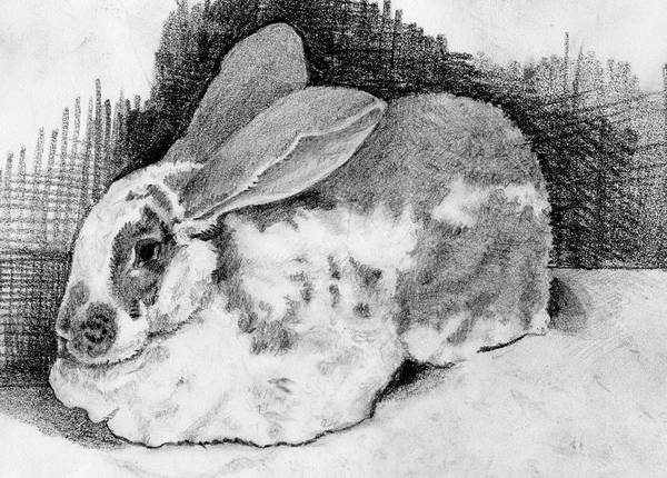 Drawing - June Bunny by Alice Ann Barnes
