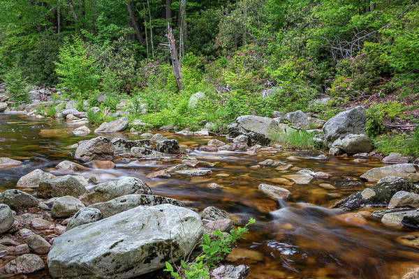 Photograph - June Morning At The Peterskill by Jeff Severson
