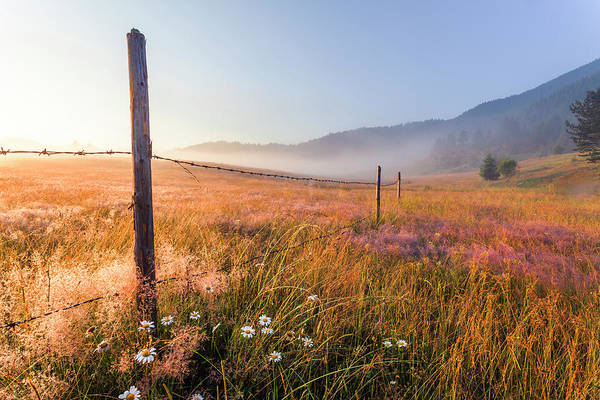 Photograph - June Morning by Evgeni Dinev