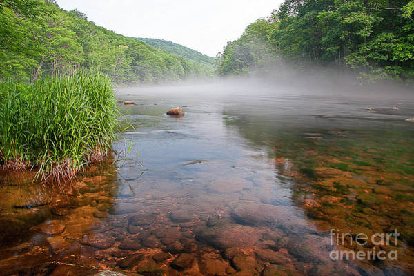 Photograph - June Morning Mist by Tom Cameron