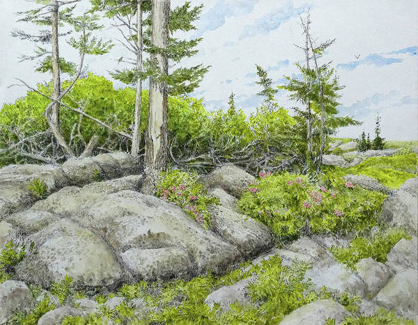 Monongahela National Forest Painting - June On The Sods by Steve Mountz