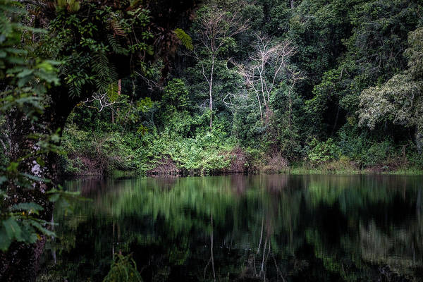 Photograph - Jungle Light by Mary Lee Dereske