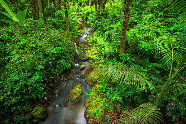 Wall Art - Photograph - Jungle Stream, Wailuku River State by Russ Bishop