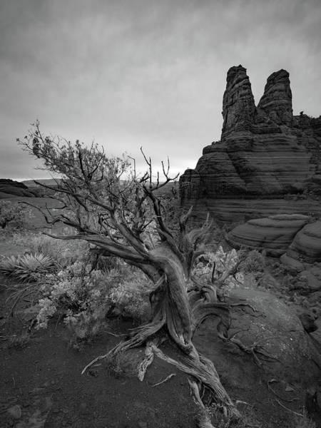 Photograph - Juniper And Nuns - Sedona by Alexander Kunz