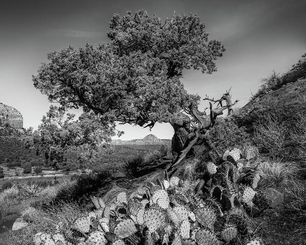 Wall Art - Photograph - Juniper Arch by Joseph Smith
