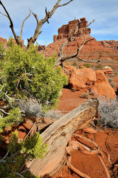 Photograph - Juniper Tree In Valley Of The Gods In Utah by Ray Mathis