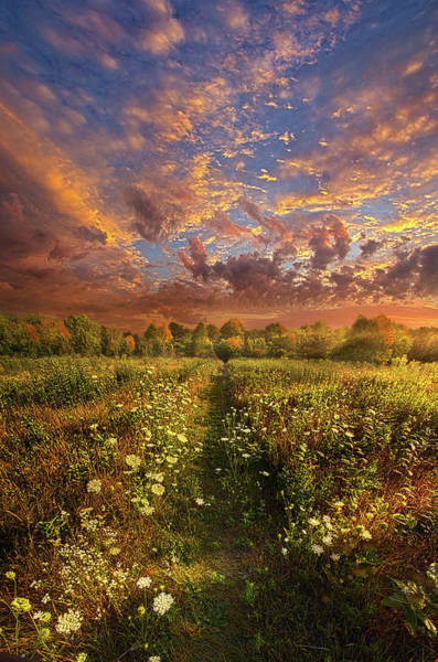 Photograph - Just Follow Your Feet by Phil Koch