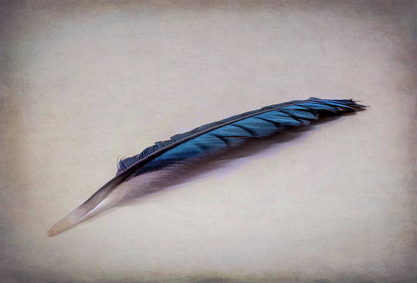 Wall Art - Photograph - Just A Feather by Sandi Kroll
