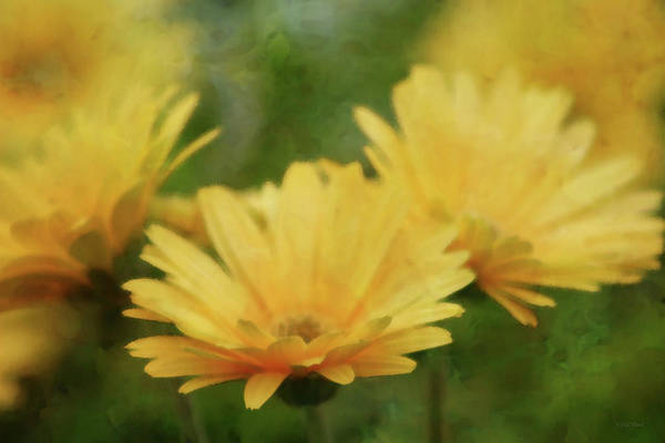 Photograph - Just A Glimpse Of Yellow 6379 Idp_2 by Steven Ward