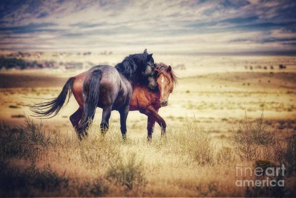 Wall Art - Photograph - Just A Kiss by Hoof and Soul Photography