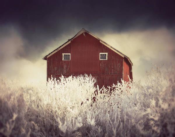 Photograph - Just A Peak by Julie Hamilton