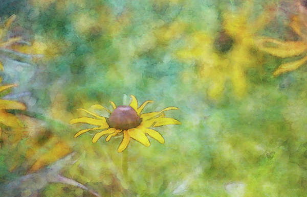 Photograph - Just Another 7153 Idp_2 by Steven Ward