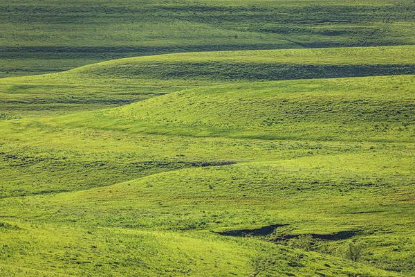 Photograph - Just Green by Scott Bean