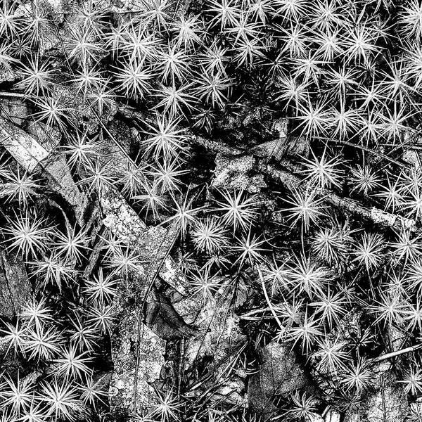 Photograph - Just Moss by Louis Dallara