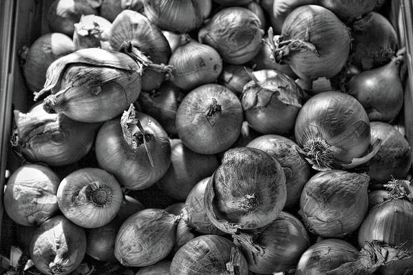 Photograph - Just Onion Bw by Tatiana Travelways