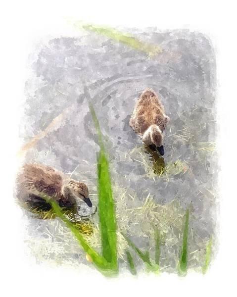 Wall Art - Digital Art - Canada Geese Goslings by Brian Wallace