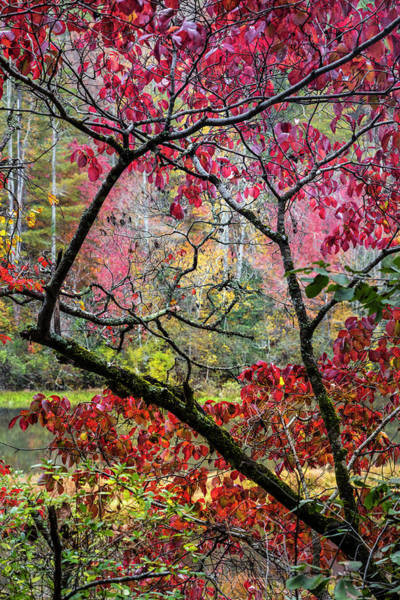 Wall Art - Photograph - Kaleidoscope Of Fall Colors by Debra and Dave Vanderlaan