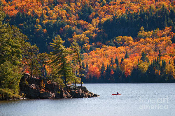 Vibrant Wall Art - Photograph - Kayaking In Algonquin Provincial Park by Aivoges