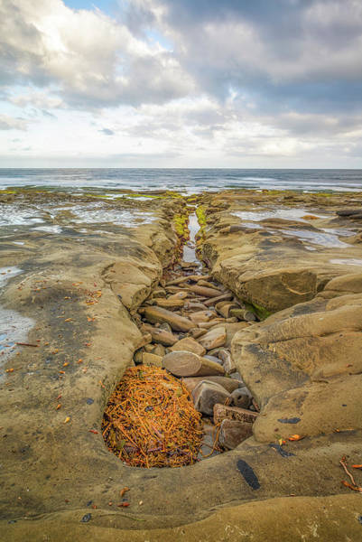 Photograph - Kelp In The Horseshoe by Joseph S Giacalone