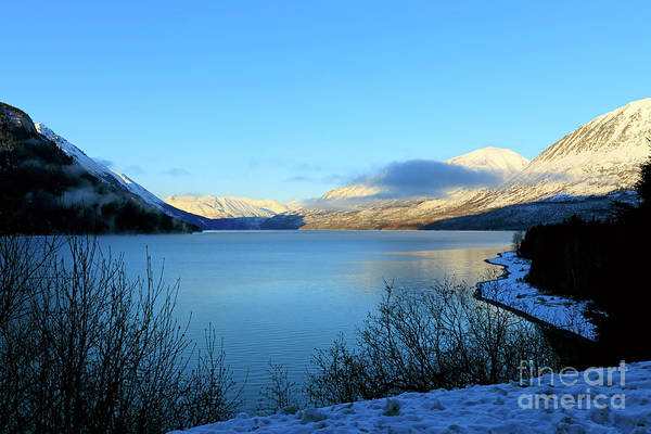 Wall Art - Photograph - Kenai Lake Primrose Kenai Peninsula Alaska by Louise Heusinkveld