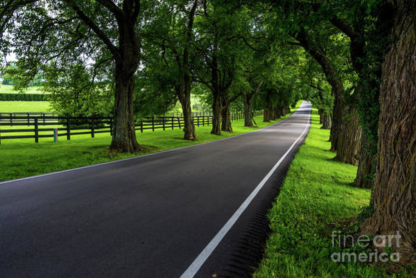 Photograph - Kentucky Bluegrass Horse Country - Old Frankfort Pike by Gary Whitton