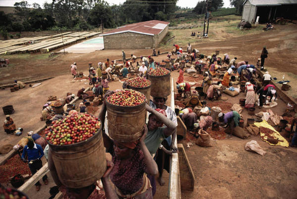 Manual Focus Wall Art - Photograph - Kenya, Coffee Pickers Sorting And by Christopher Pillitz